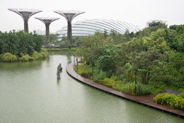 Es un bosque tropical. El clima es pegotudo