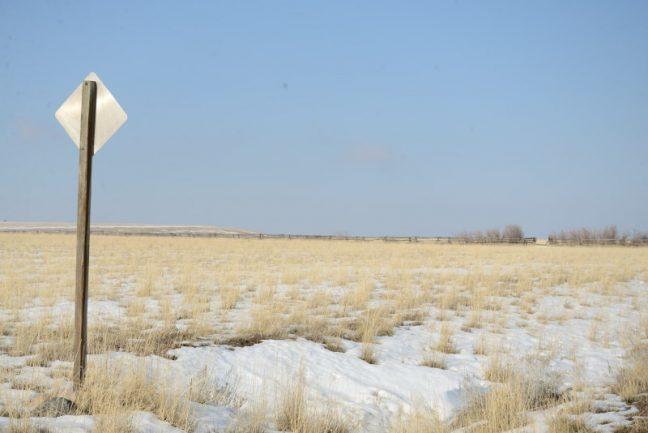 Vegetación invernal (la veraniega es parecida pero sin nieve)