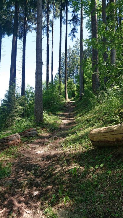 Camino hacia Niesen por el bosque de la parte baja