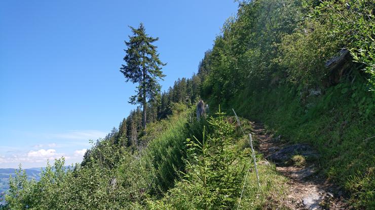 Parte del camino en que se empieza a notar la vegetación más baja