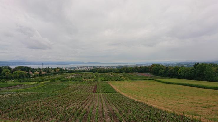 Por Fin! Vista del lago Lemán y Lausanne!