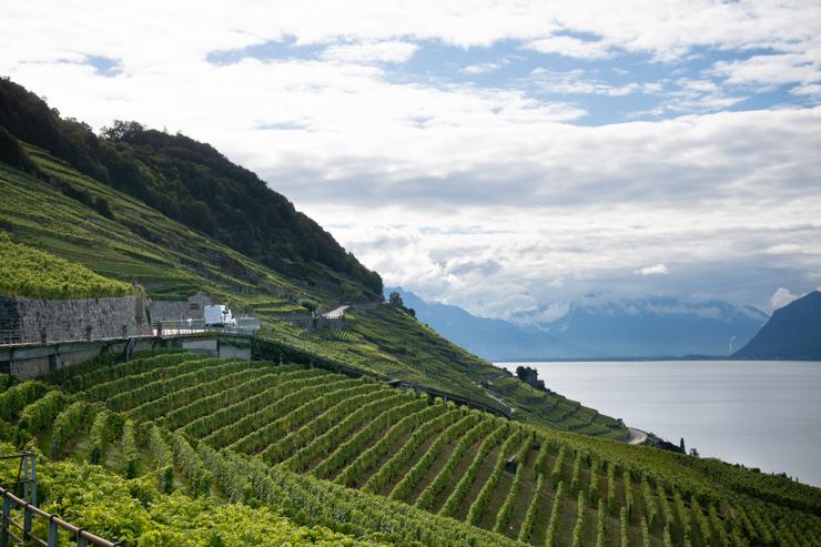 Las terrazas de Lavaux con el lago Lemán de fondo